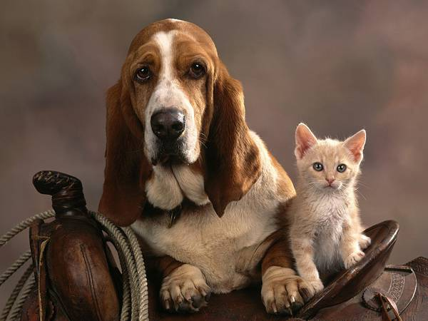 賃貸住宅でペットを飼う為に必要なこと【ペットジャーナリスト 阪根美果】