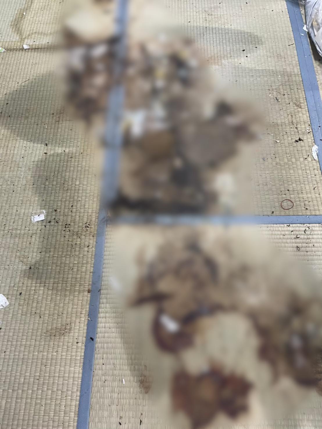 汚染した畳