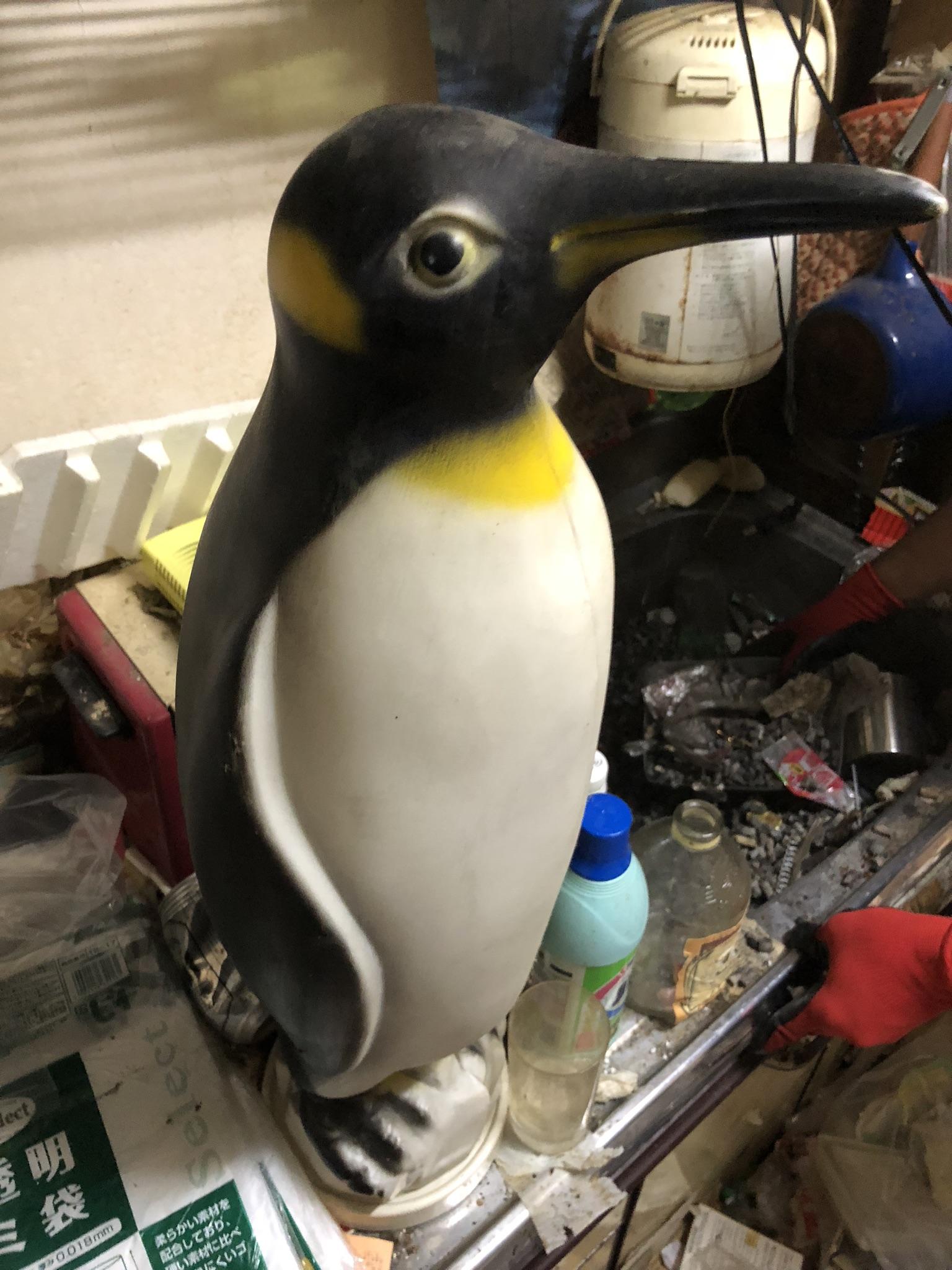 ペンギン出現